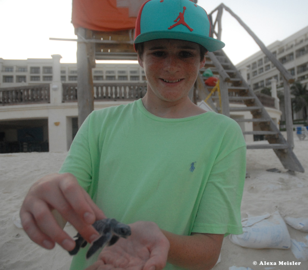 baby turtle release at Casa Magna in Cancun, Mexico