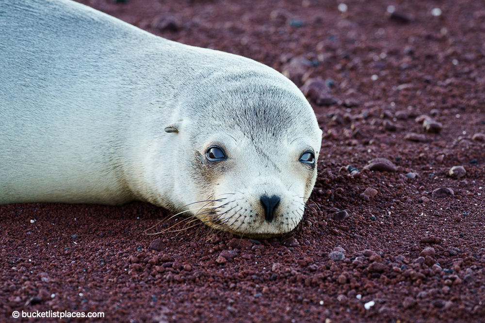 Sony A7rIV Photo Example from the Galapagos